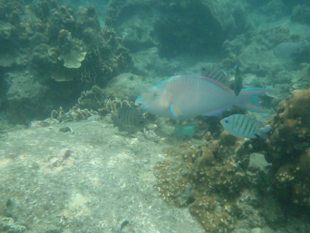 Snorkelling in Aow Leuk Bay