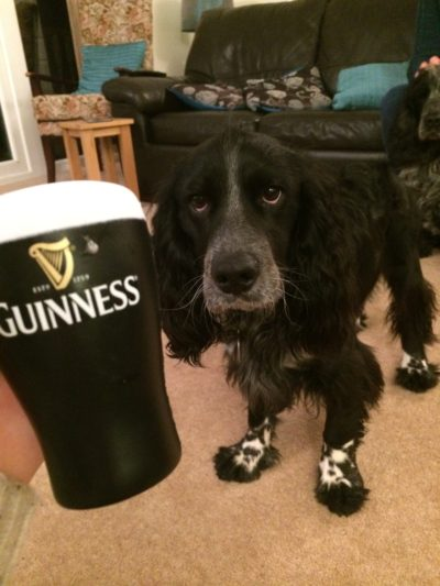 Guinness dog