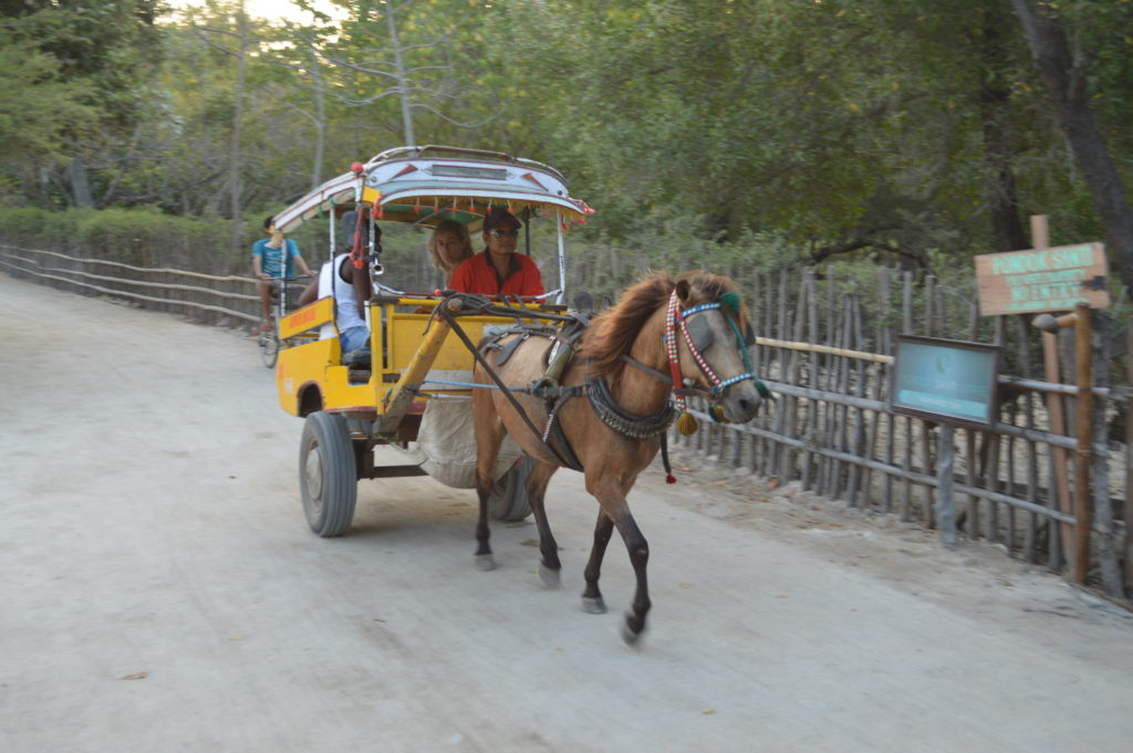 Gili Trawengan horse and cart