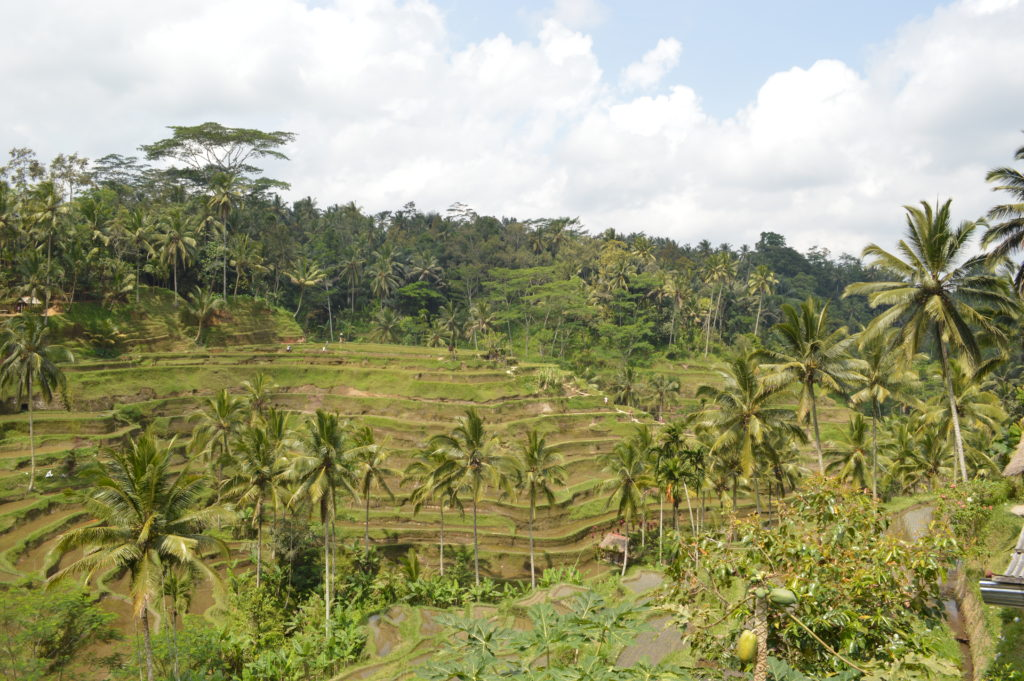 Tengalalang rice terrace